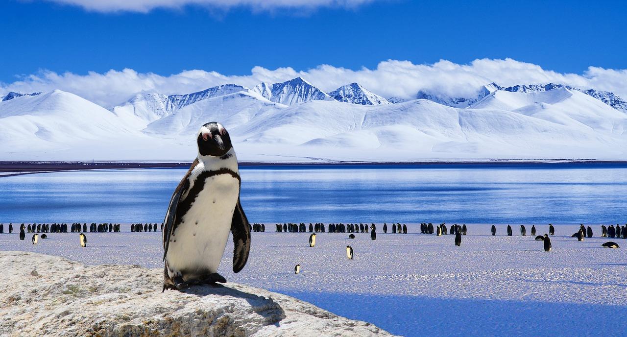 ペンギン と は ファースト